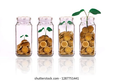 Plant gowned on Money coins in bottle on white background,Business investment growth concept.