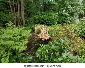 plant with green leaves and pink flowers