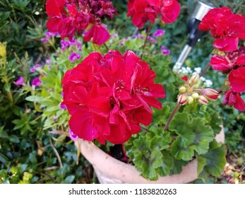 plant with green leaves and red flowers in container