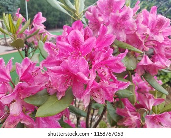 plant with green leaves and wet pink flowers
