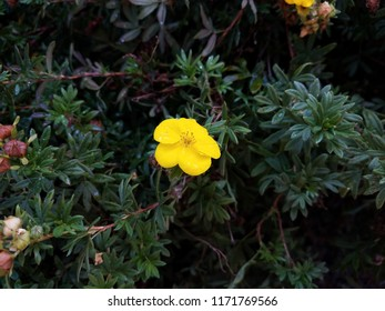 plant with green leaves and yellow flower