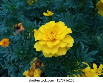 plant with green leaves and yellow flower petals