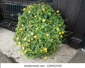 plant with green leaves and yellow flowers near black bench and wall