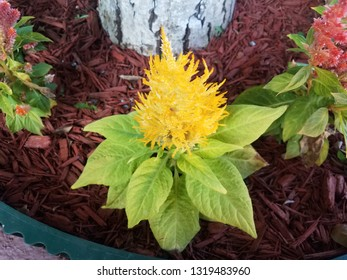 plant with green leaves and yellow flowers near tree