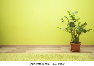 Plant in green room