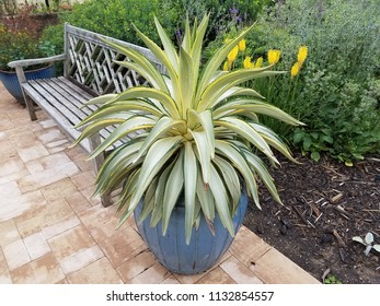 plant with green and yellow leaves in blue flower pot