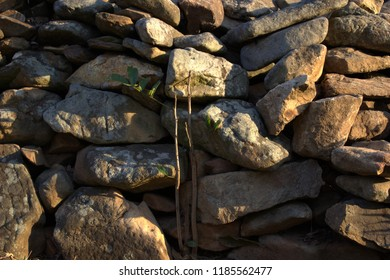 Plant growing against rough stone wall