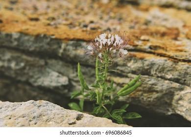 Plant growing between Rocks