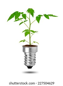 Plant growing from bulb isolated on white background. The concept of clean energy