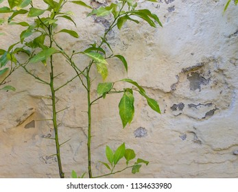 Plant growing by outdoor wall