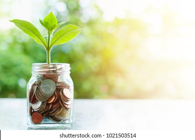 Plant growing from coins in the glass jar on blurred green natural background with sun light effect and copy space for business and financial growth concept