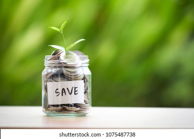 Plant growing  in Coins glass jar for money saving and investment financial concept