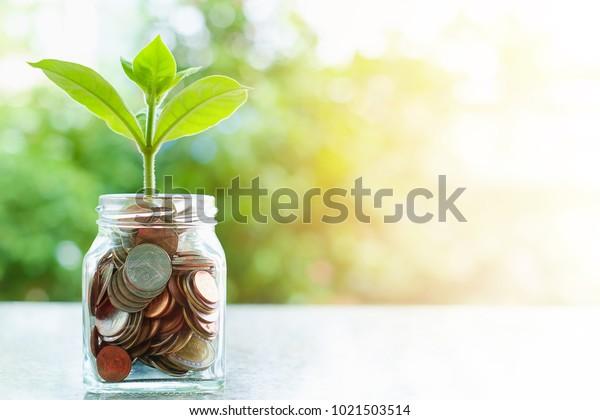 Pflanzen, die von Münzen in der Glasdose auf unscharfem grünem Naturhintergrund mit Sonnenlicht wachsen, und Kopienraum für das Konzept des Unternehmens- und Finanzwachstums