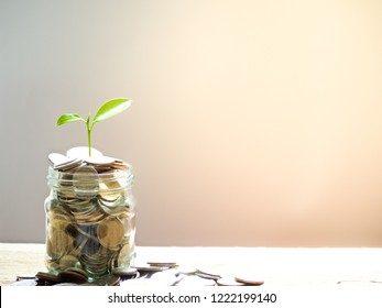 Plant growing from coins money in glass jar on wooden table with copy space, saving or investing concept
