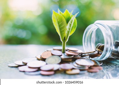 Plant growing from coins outside the glass jar on blurred green natural background for business and financial growth concept