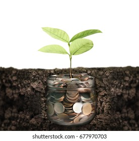 Plant growing from coins in a piggy bank Glass