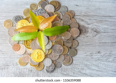 Plant Is Growing From Money Coins Saving - Investment And Saving Money Concept, View From Above, Flat Lay.