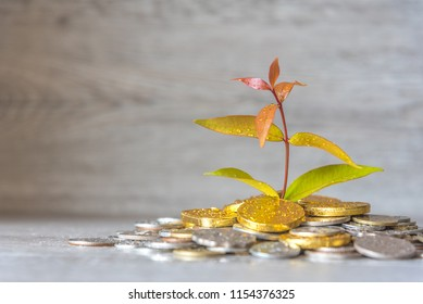 Plant Is Growing From Money Coins Saving - Investment And Saving Money Concept.