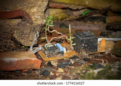 A plant growing in the most unsuspected place, an old abandoned electronic circuit.