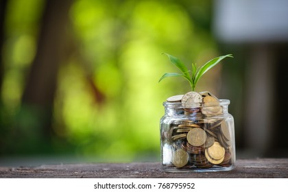 Plant growing on Coins glass jar and concept money saving coins.