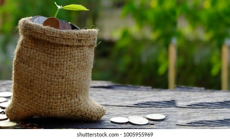 Plant Growing on Coins in sack - Investment And Interest Concept