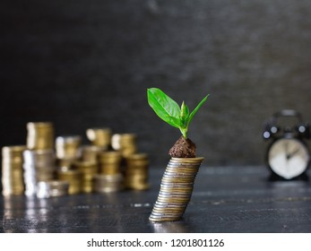 plant growing on coins stack,investments growing up and saving concept