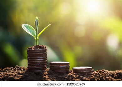 plant growing on coins sunshine background. concept saving money