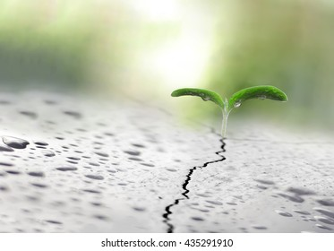 Plant growing on crack pavement. Growth, financial planning and investment concept.