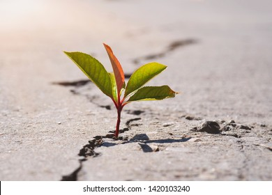 plant growing on crack street, soft focus, blank text