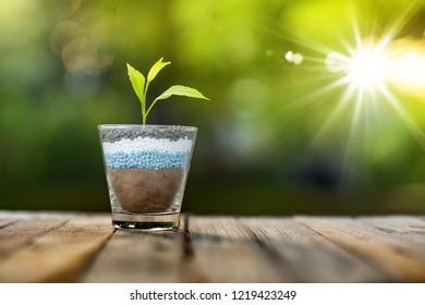plant growing on glass of nitrogen potassium phosphorus fertiliser