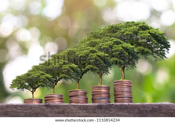 Pflanze, die auf dem Geldautomatenstapel wächst. Sparen des Geldkonzepts. Finanzierung einer nachhaltigen Entwicklung. Wirtschaftswachstum.