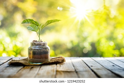 Plant growing on organic fertiliser stack inside glass with sunlight and warm environment