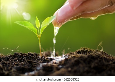 Plant growing on soil with hand watering over sunlight and green background