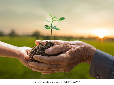 Plant growing on soil with kid and grandfather hands holding over sun and sunlight ray and sunrise background