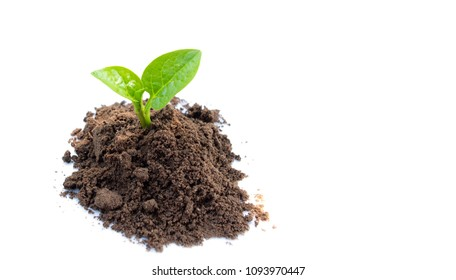 plant growing on soil over white background