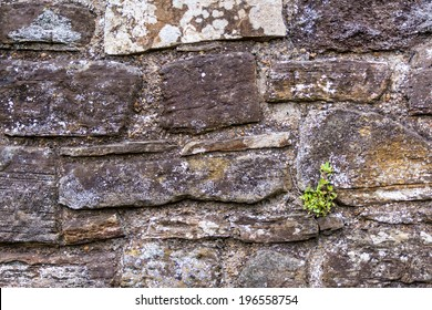 A plant growing on a stone wall against all odds and signifying hope and rebirth, seen in Rye, Kent, UK.