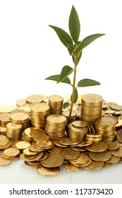 plant growing out of gold coins on white background close-up