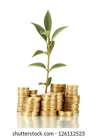 plant growing out of gold coins isolated on white