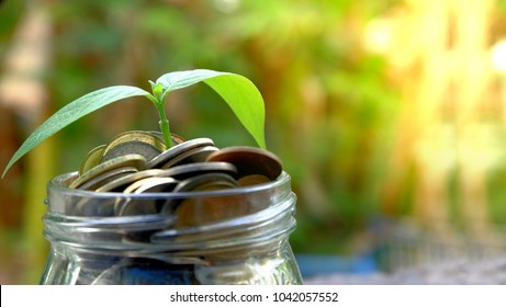 Plant growing over Money coins in jar.Insurance money savings, retirement planning ,travel and investment ideas, passive income.education plan