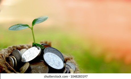 Plant growing over Money coins in sack .Idea for Insurance money savings, retirement planning ,travel and investment ideas, passive income.education  plan,401k plan, Financial freedom.