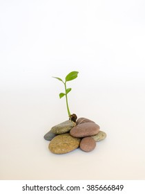 Plant growing from pebbles isolated on white background