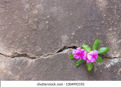 Plant growing with pink flower on green leaf, young tree through crack in pavement free background. copy space for add text massage creative graphic design or advertisement love or retro concept.