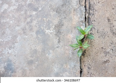 Plant growing with Purple flower on green leaf young tree through crack in pavement background