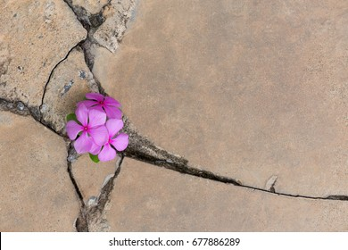 Plant growing with Purple flower on green leaf young tree through crack in pavement concrete background