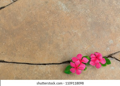 Plant growing with red flower on green leaf, young tree through crack in pavement free background. copy space for add text massage creative graphic design or advertisement vintage or retro concept.