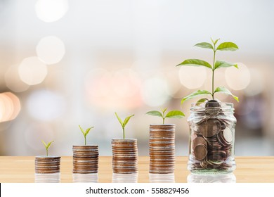 Plant Growing In Savings Coins/ investment and retirement or education Concept
