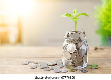 Plant growing in savings coins jar and coins on wooden table. Business growth, interest and investment concept.
