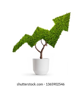 Plant growing in the shape of an arrow isolated on white background - Shutterstock ID 1365902546