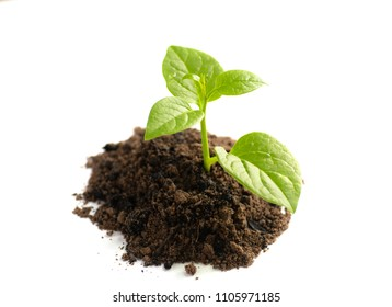 plant growing with soil isolate on white background