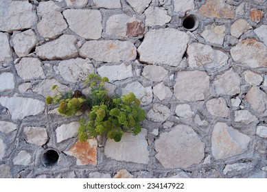 Plant growing from stone wall